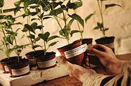 etiketa nalepka za označevanje sadik